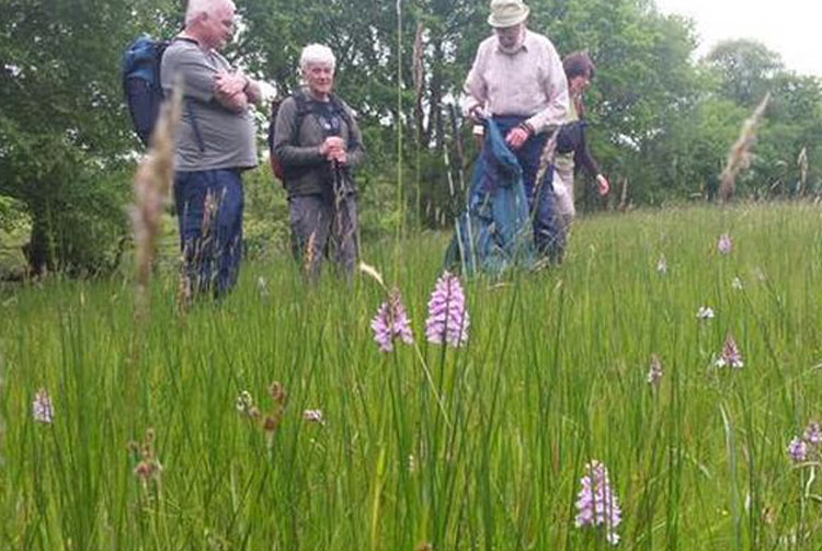 Volunteers at Cwm Ivy Meadow, part of the Carmarthenshire Meadows Project